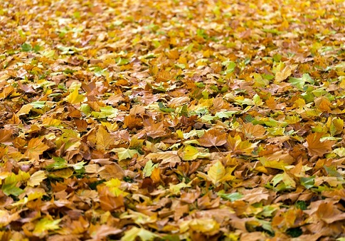 dried leaves on lawn