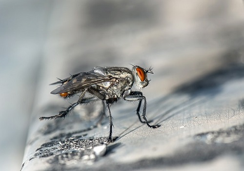 How To Keep Flies Out Of Your House 3