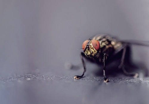 How To Keep Flies Out Of Your House 4